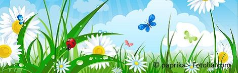 Summer day - Flower garden with ladybug